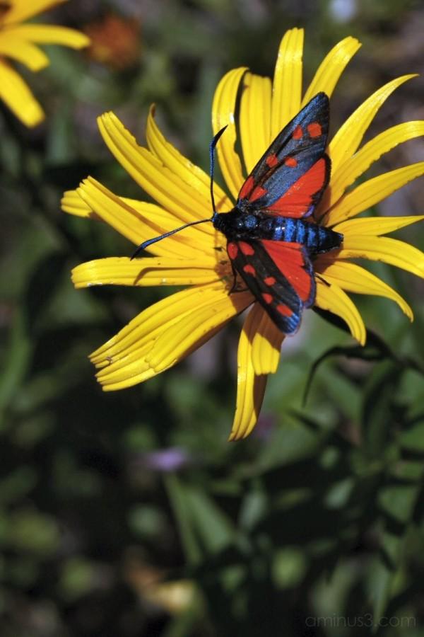 A strange butterfly