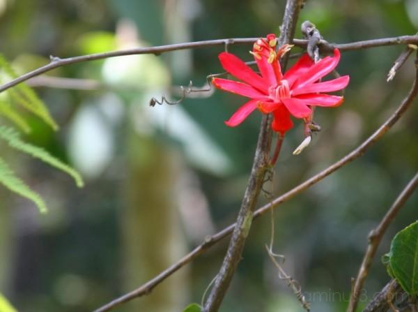 flower of a liana