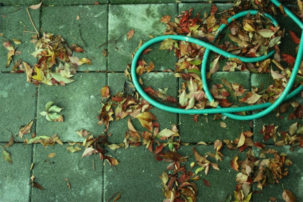 The Autumn Hose