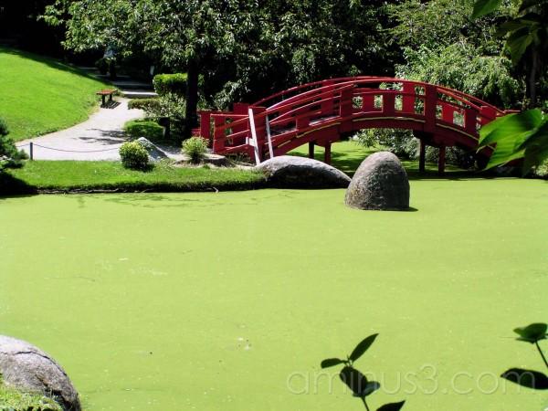 japanese garden, pond