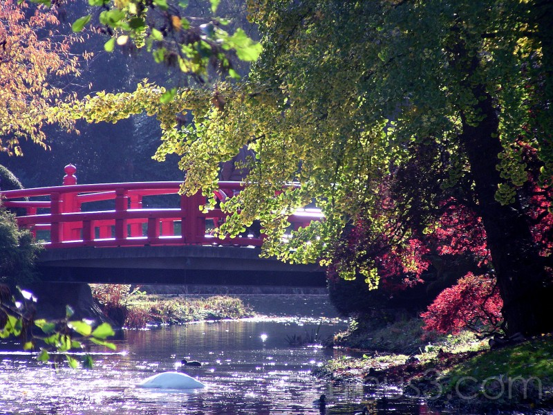 japanese gardens, gardens, Japan, bridge
