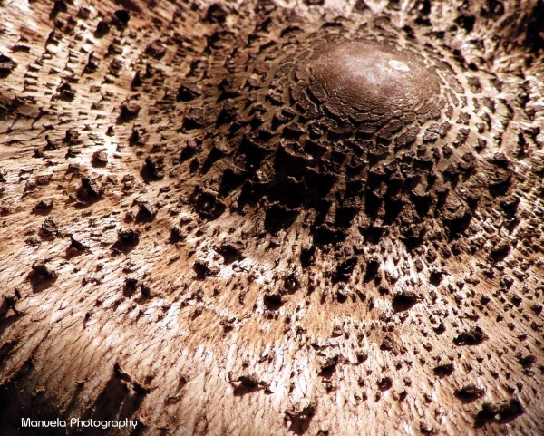 mushroom, woods, brown, rusty