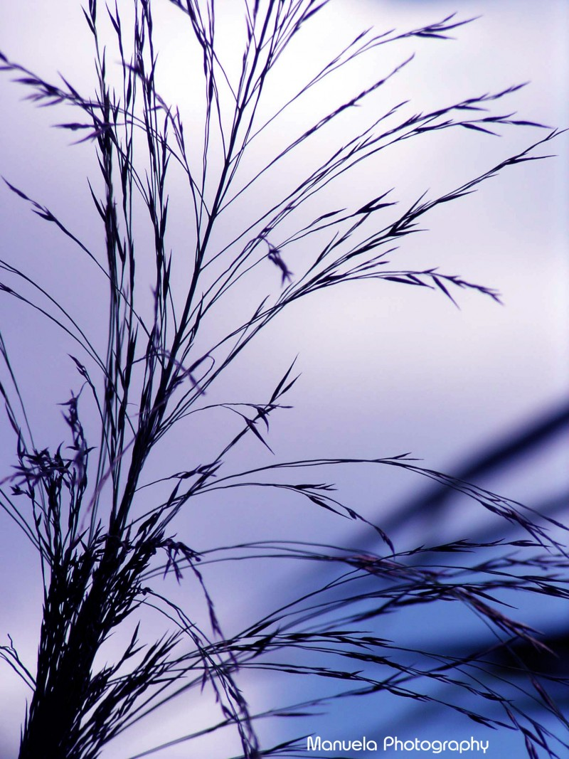 grass, shadow, silhouette, feather