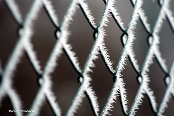 frost, ice, cold, winter, fence, metal
