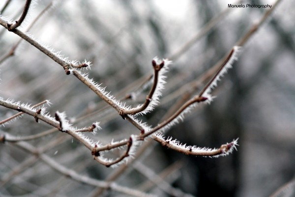 frost, ice, cold, winter, branch