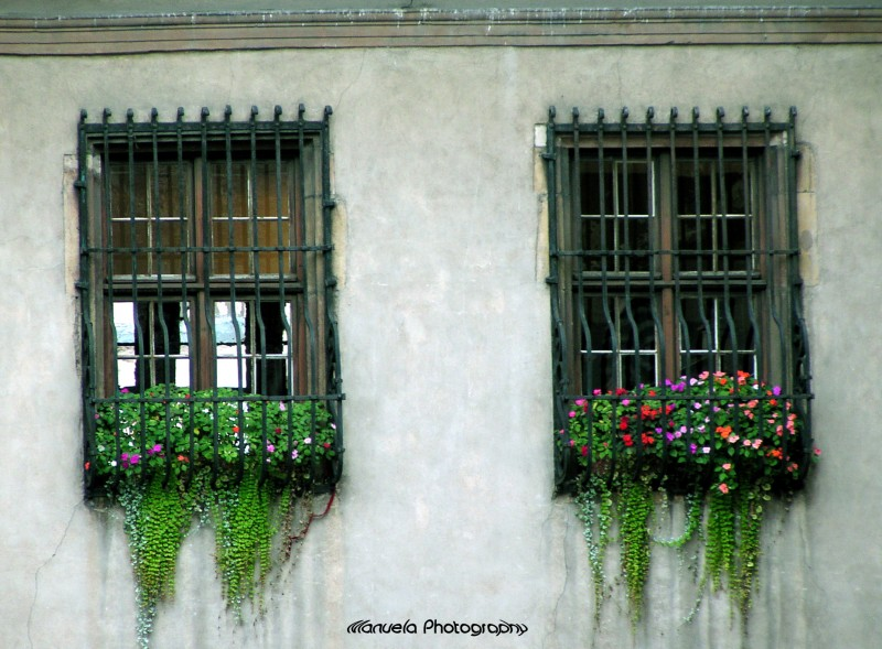 window france alsace petite venice wall flowers