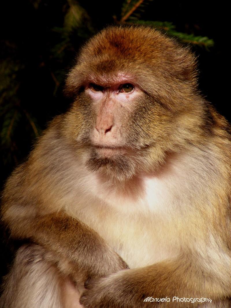 monkey primate animal park