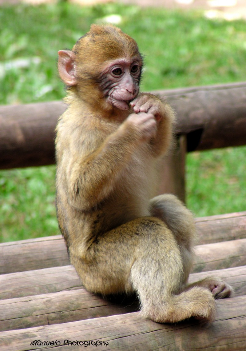 monkey primate baby animal park newborn