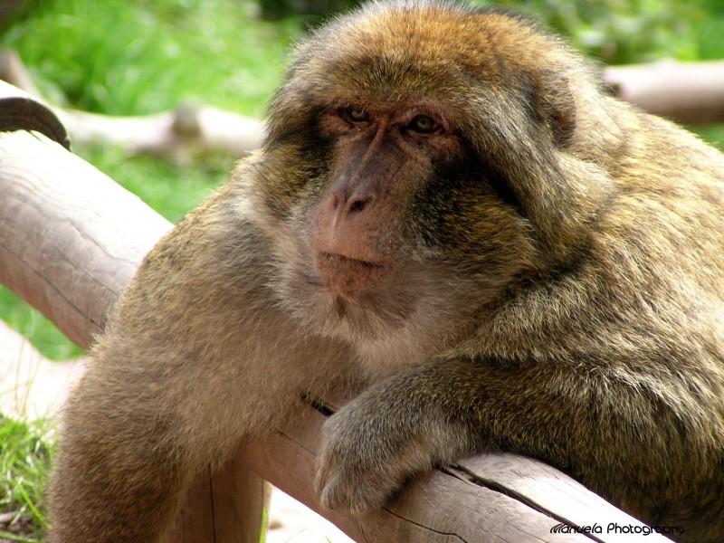 monkey primate animal park king