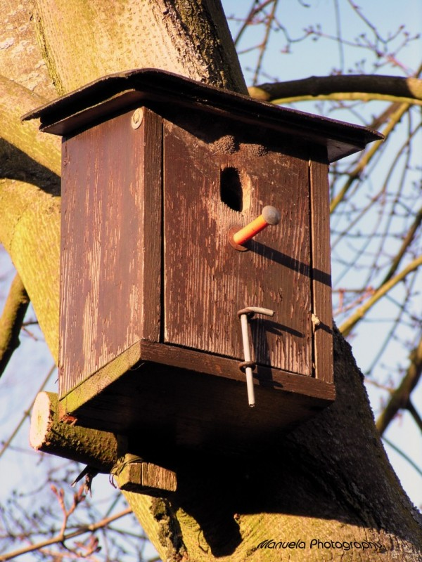 bird house birdhouse tree spring