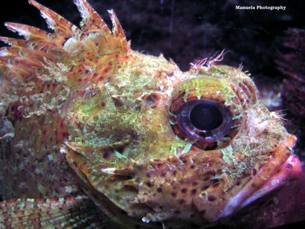 stonefish fish aquarium sea water zoo germany