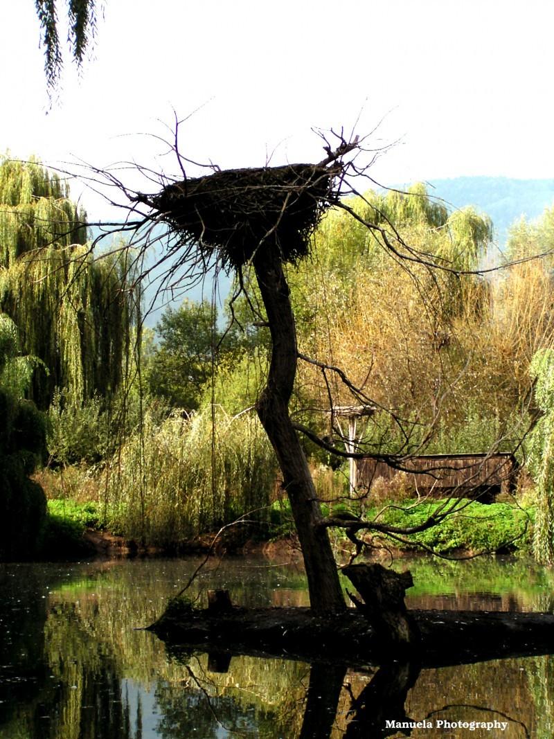 white stork bird stork nest alsace france