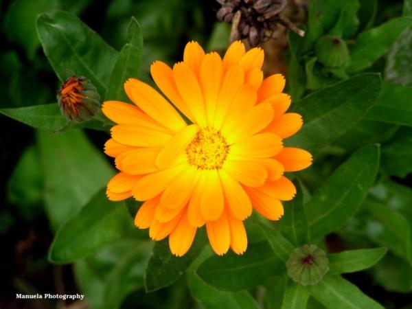 yellow bloom flower fence garden