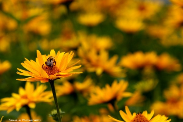summer holiday flowers bloom insect yellow germany