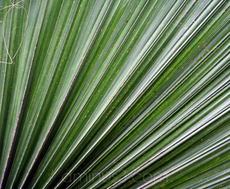 lines, fan, leaf, tree, green, palmengarten