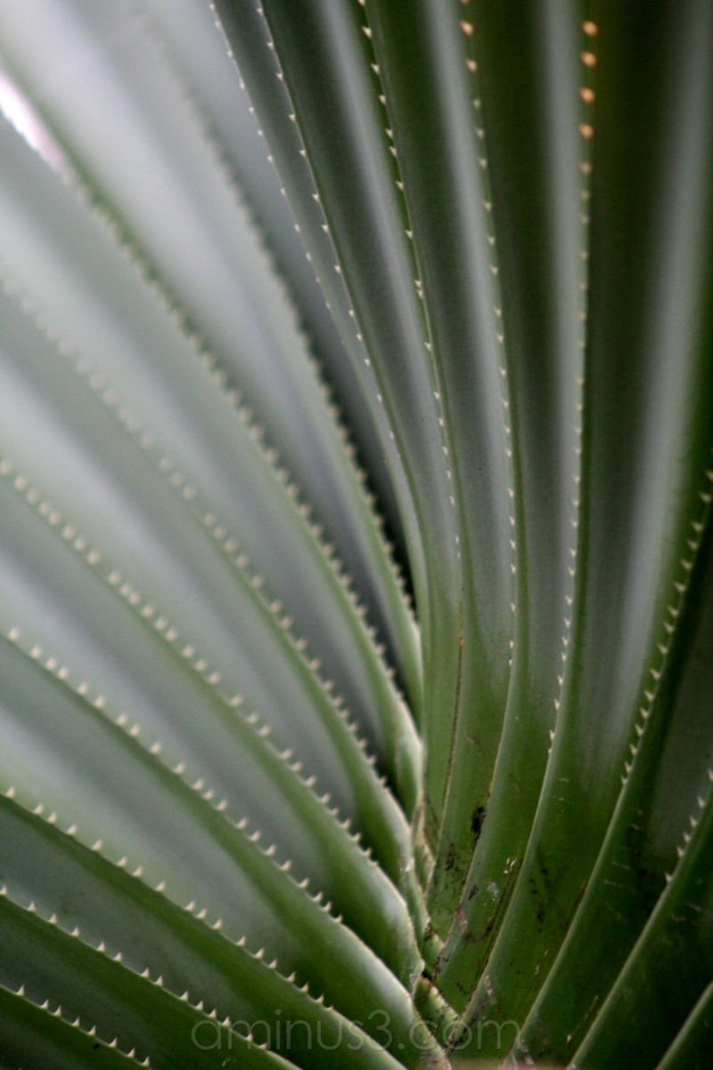 tree flora lines cactus needles trunk log thorns