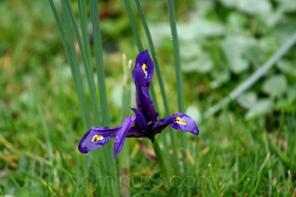 park palmengarten germany bloom flower purple yell