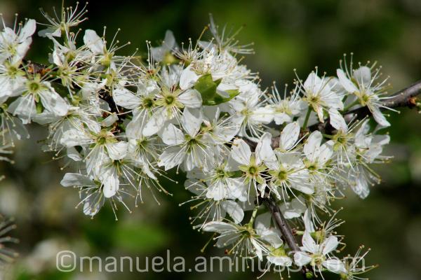 bloom flower tree spring petals germany