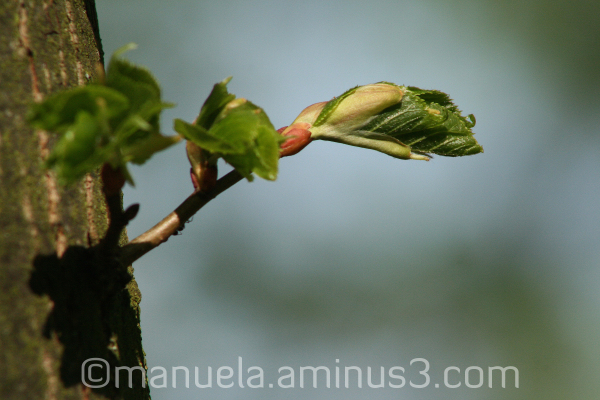 twig bud branch new life spring germany