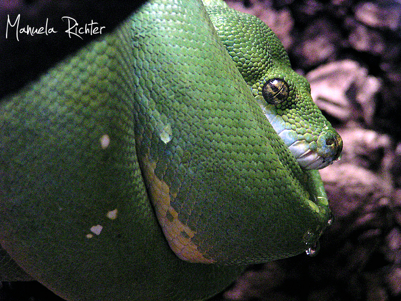snake reptile green vivarium darmstadt germany