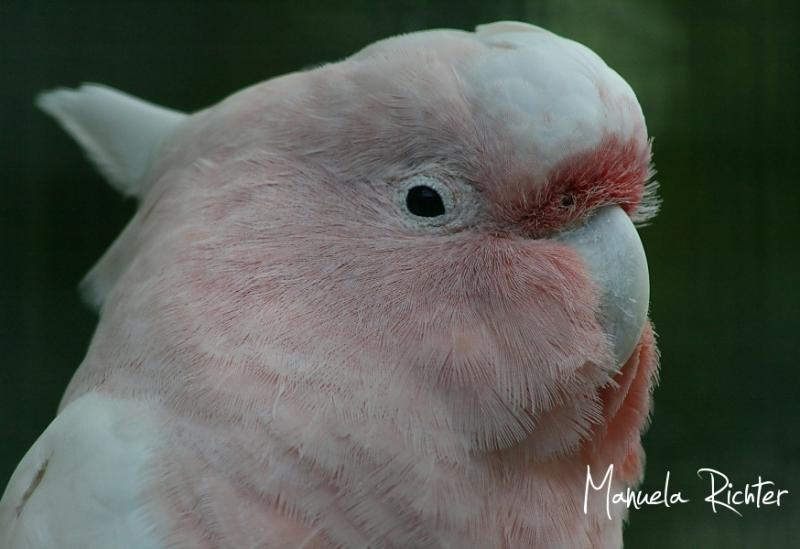 parrot peach bird park animal