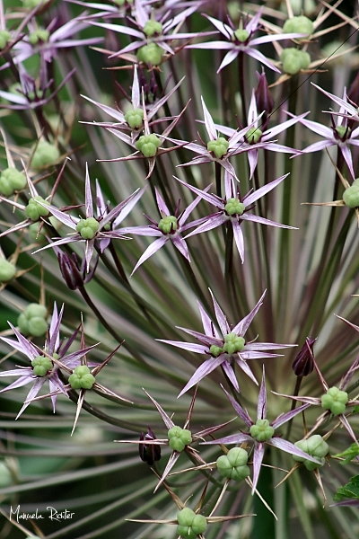 flower bloom plant floral botanic green purple