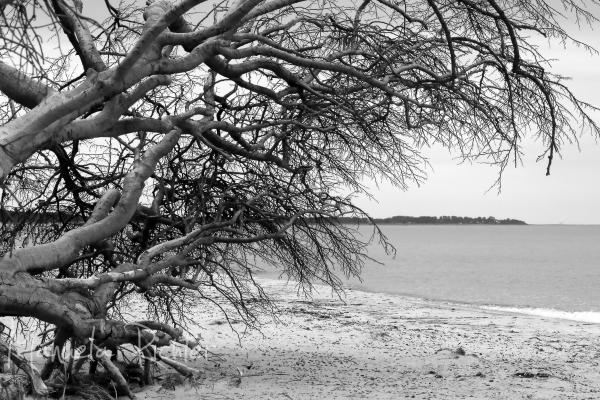 sea beach tree shore wild weststrand germany