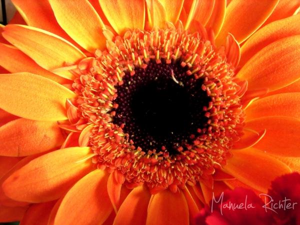birthday flower bloom light orange red sun happy