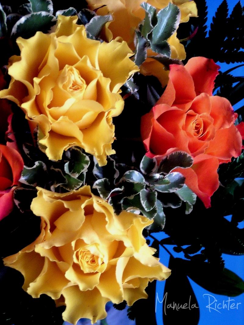 birthday flower bloom orange yellow red happy