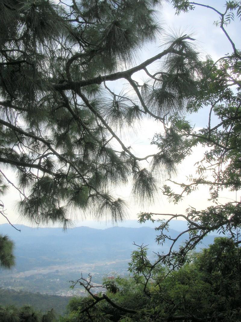 The Saru tree!
