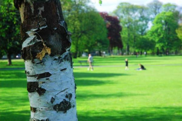 Park Bark