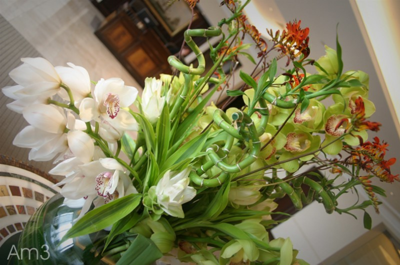 Floral Beauties...2