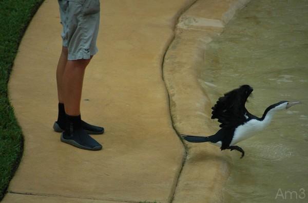 At the Australia Zoo...4