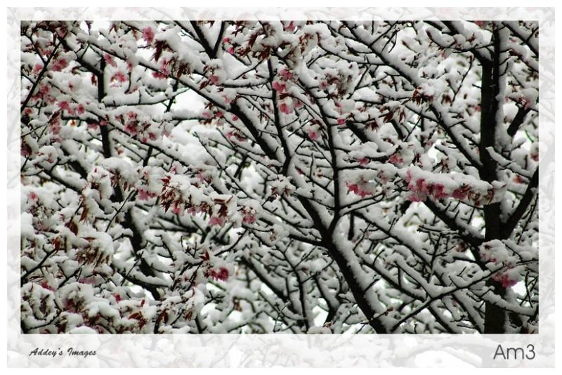 Let It Snow...2