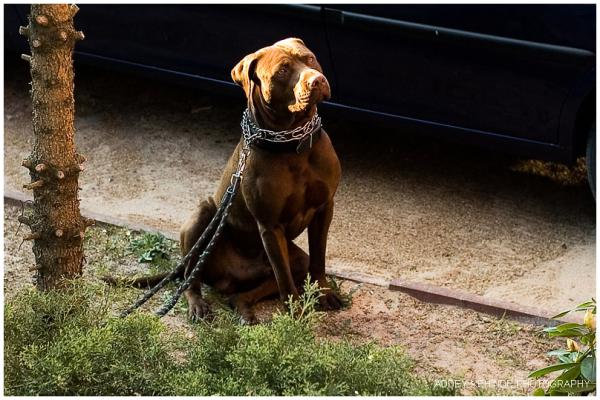 Doggie...