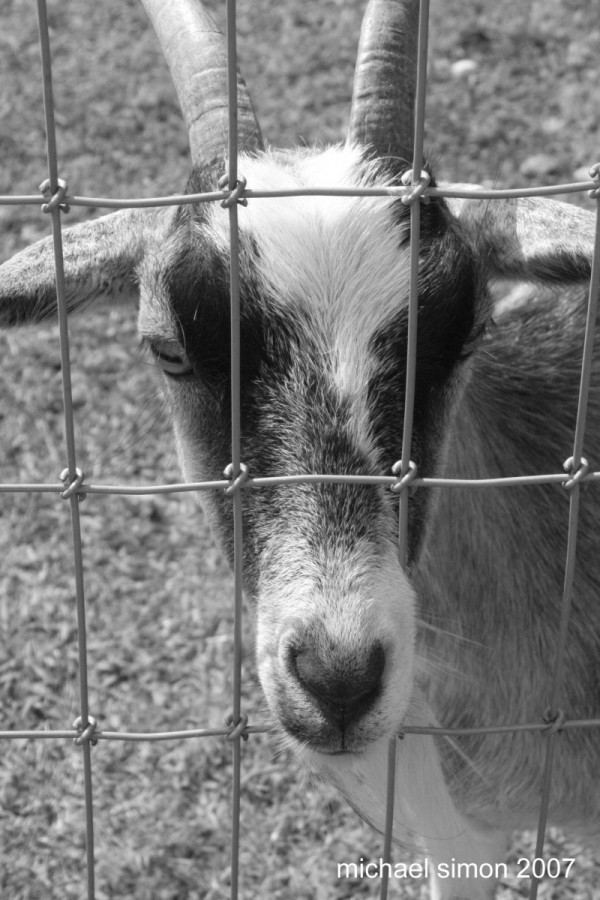 Through The Fence