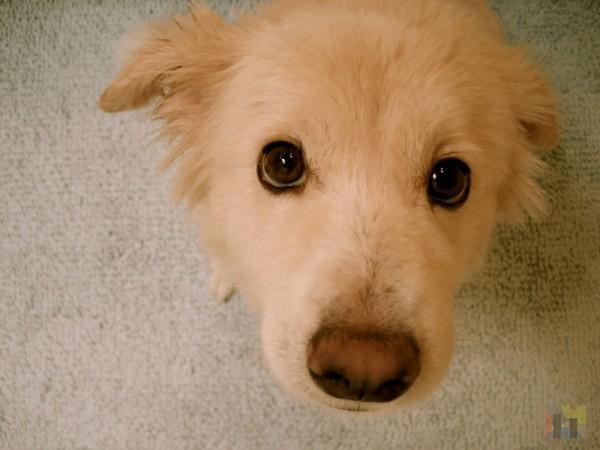 My dog cotton.