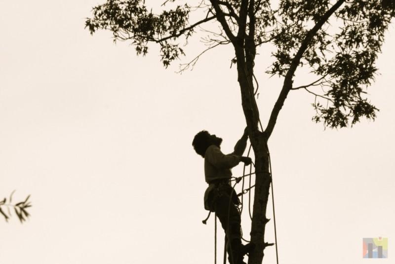 Tree being cut down.