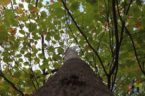 Up a Tree 1