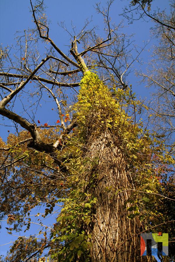 Tree in Oakhurst Community Garden