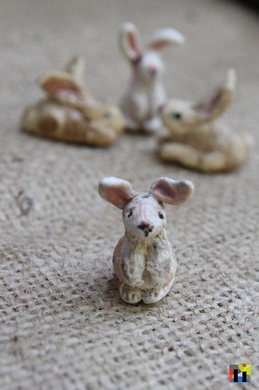 Bunny Portrait 1