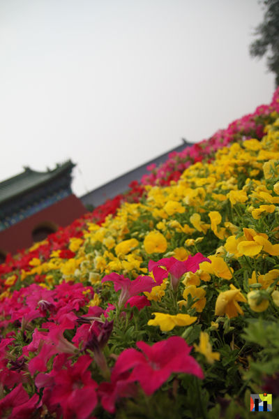 Flowers at The Temple of Heaven