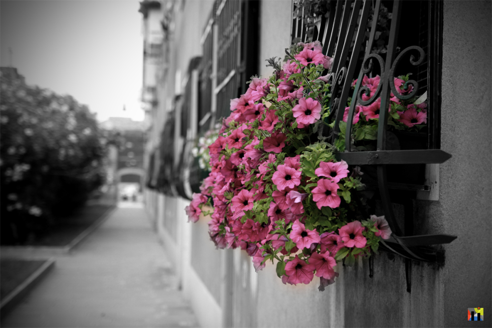 Flower Box in Venice