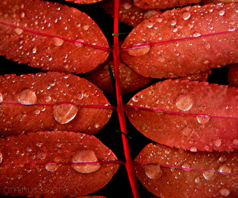 Water droplets on autumn leaf