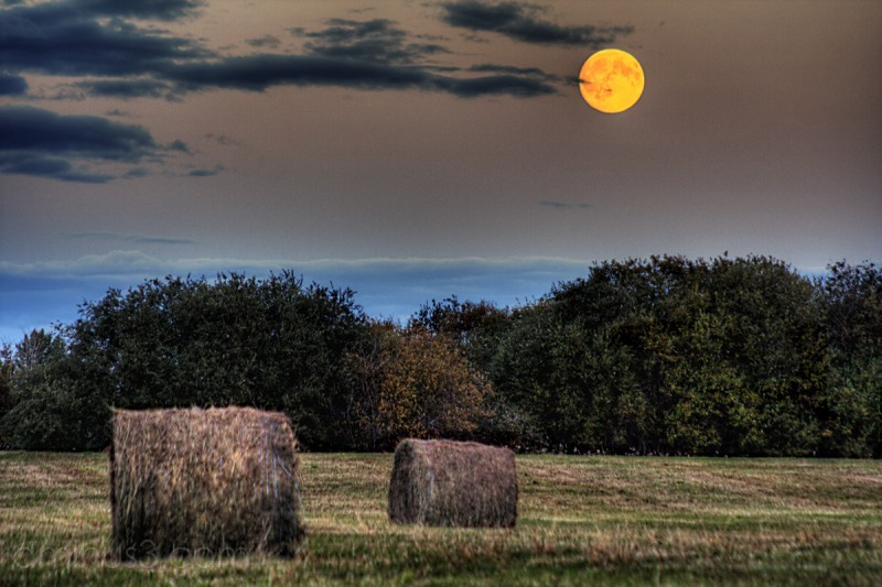 The Harvest & the Moon