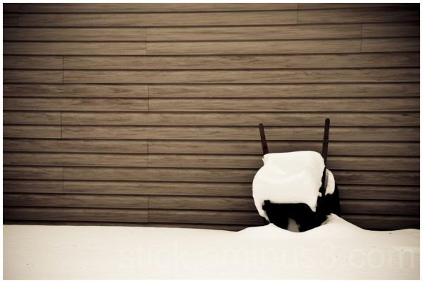 Wheelbarrow covered in snow