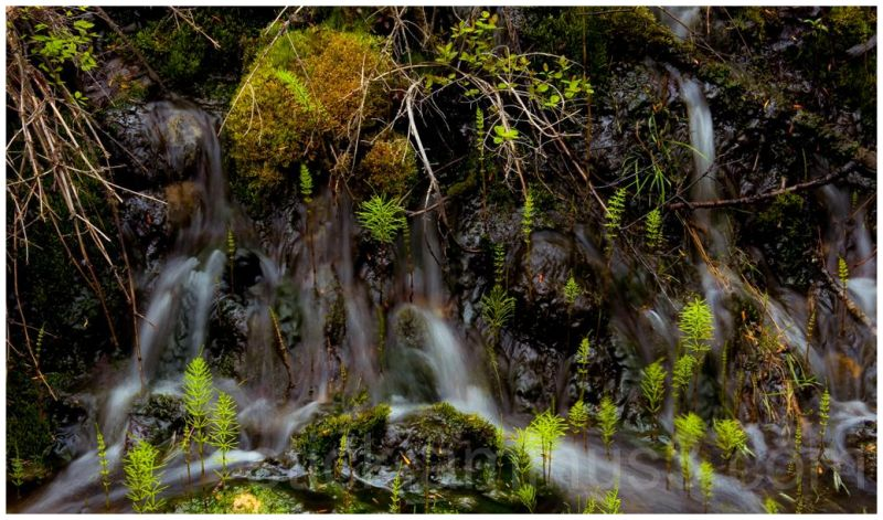Spring runoff into Mark Creek