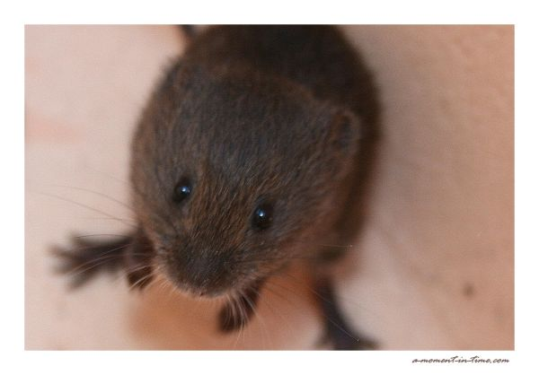 Plea - Save a Vole!