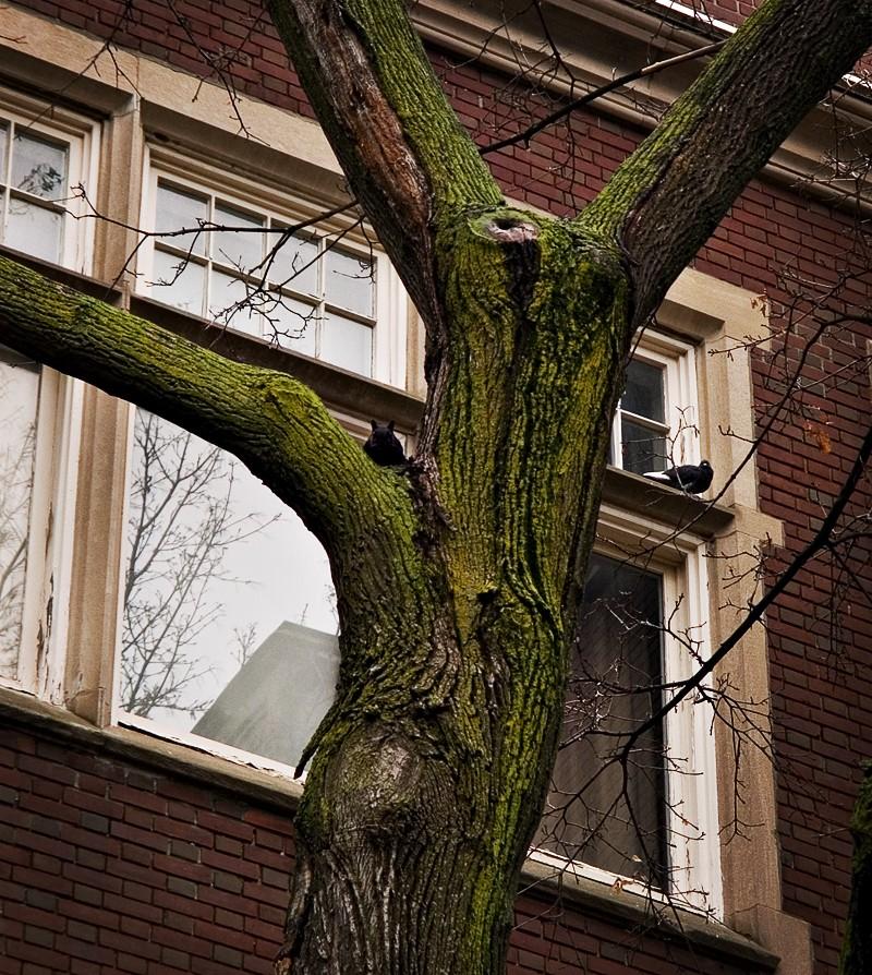 Tree Squirrel Pigeon