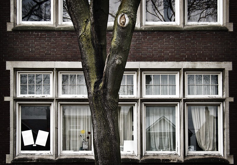 Treeschoolhouse [3 of 2]